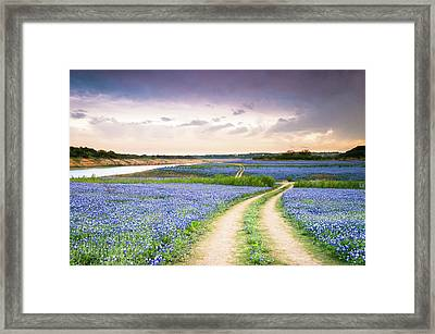 A Trail In The Middle Of Bluebonnet Field - Texas Wildflower Framed Print by Ellie Teramoto