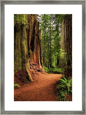 Framed Print featuring the photograph A Trail In The Redwoods by James Eddy