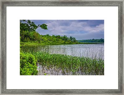 A Tranquil Morning Framed Print