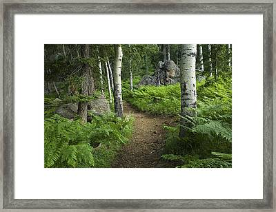 A Tranquil Path  Framed Print