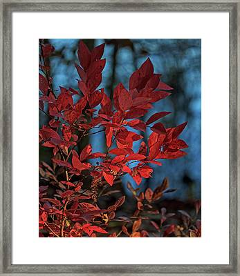 Framed Print featuring the photograph A Trap Pond November by Robert Pilkington
