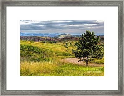 A Tree Among The Hogs Framed Print by Jon Burch Photography