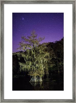 A Tree And North Eastern Starry Sky - A Portrait Of A Bald Cypress Framed Print by Ellie Teramoto