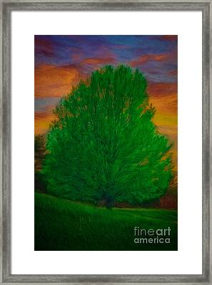 A Tree At Sunset Framed Print