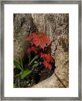 A Tree Hug Framed Print by Donica Abbinett