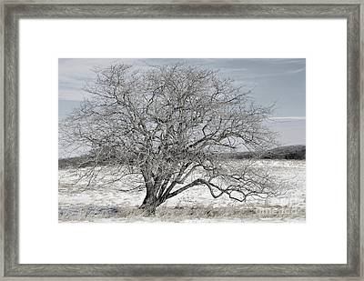A Tree In Canaan Framed Print by Randy Bodkins