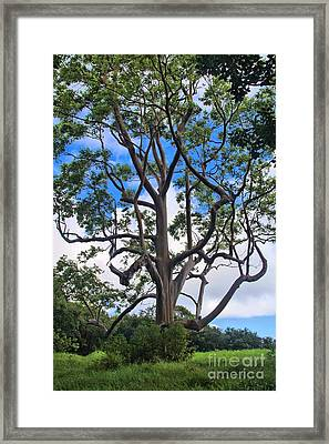 Framed Print featuring the photograph A Tree In Paradise by DJ Florek