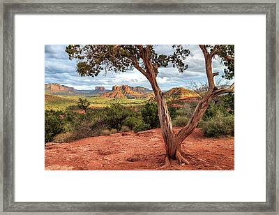Framed Print featuring the photograph A Tree In Sedona by James Eddy