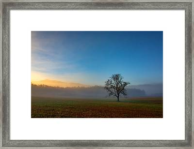 A Tree In The Mist In Cades Cove Framed Print