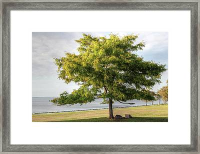Framed Print featuring the photograph A Tree In The Park Bristol Ri by Tom Prendergast