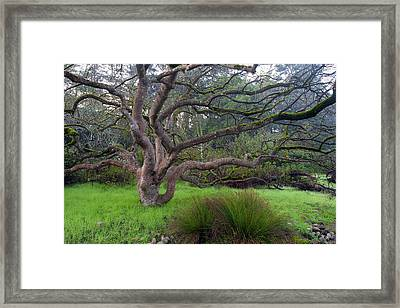 Framed Print featuring the photograph A Tree In The Park  by Catherine Lau
