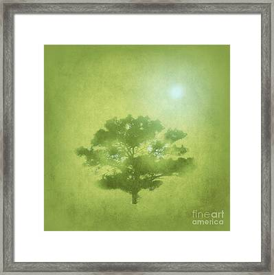 A Tree In The Pasture Framed Print