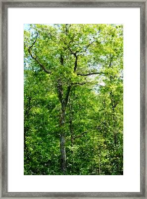 A Tree In The Woods At The Hacienda  Framed Print by David Lane
