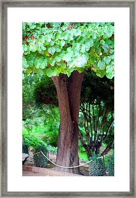 A Tree Lovelier Than A Poem Framed Print