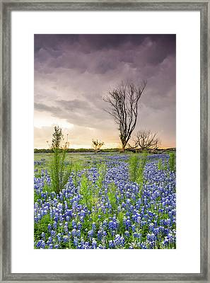 A Tree Of Wildflower Field Under Stormy Clouds - Texas Framed Print