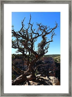A Tree On The Edge Framed Print