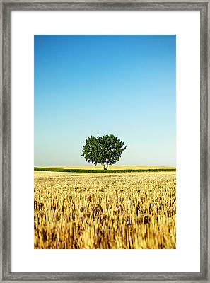 A Tree Stands Alone Framed Print by Todd Klassy