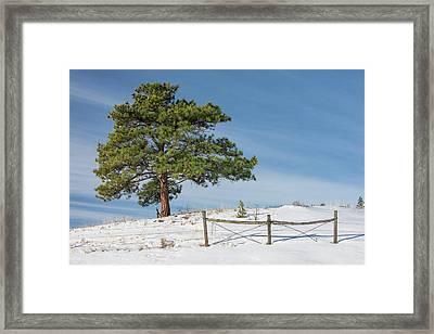 A Tree Warms Framed Print