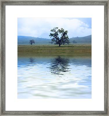 A Trees  Reflection Framed Print by Gravityx9   Designs