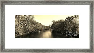 A Trees Thirst For Water - Sepia Framed Print by Scott D Van Osdol