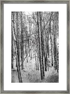 A Tree's View In Winter Framed Print