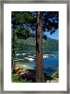 A Trees View Of Fallen Leaf Lake Framed Print