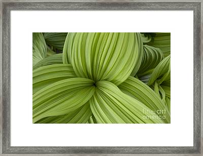A Triangle Of Leaves Framed Print by Tim Grams