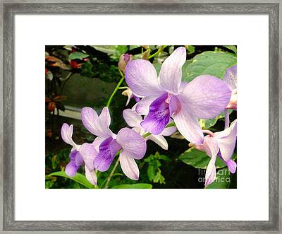 A Trio Of Pale Purple Orchids Framed Print by Sue Melvin