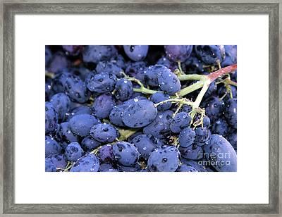 A Trip Through The Farmers Market Featuring Purple Grapes. Framed Print