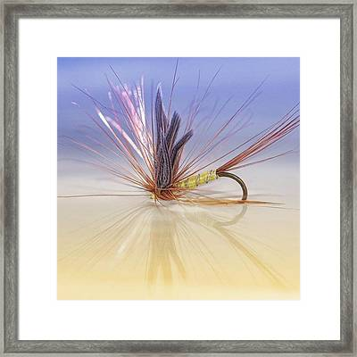 A Trout Fly (greenwell's Glory) Framed Print