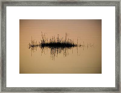 A Tuft Of Grass Reflected In The Gold Framed Print by Stephen St. John