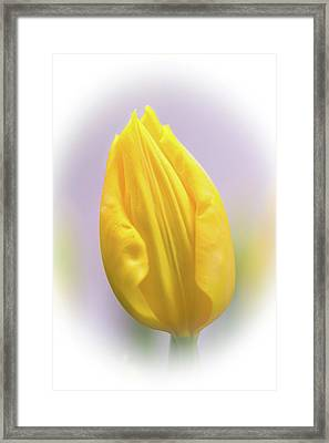 A Tulip In Dandelion Yellow Framed Print by Mother Nature