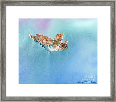 A Turtles Flight Framed Print by Tracy L Teeter