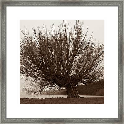 A Veritable Matriarch Framed Print by Odille Esmonde-Morgan