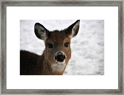 A Very Dear Portrait Framed Print by Mike Martin