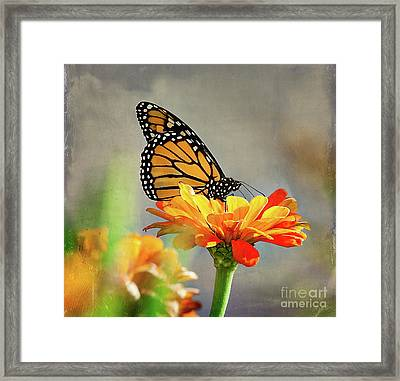 A Very Late Visitor To The Garden Framed Print