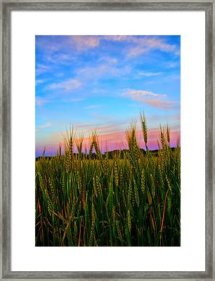 A View From Crop Level Framed Print by Bill Tiepelman