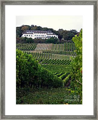 A Vineyard Above Rudesheim 1                       Framed Print by Sarah Loft