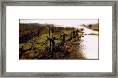 A Vineyard Daydream Framed Print by Heidi Peschel