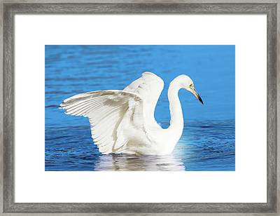 A Vision In White Framed Print by Mark Andrew Thomas