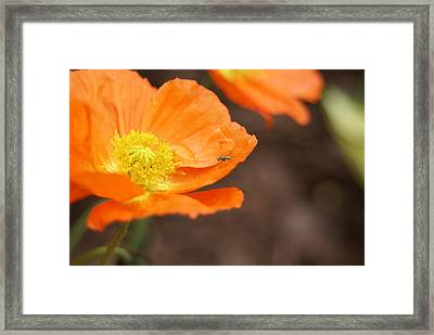 Framed Print featuring the photograph A Visitor by Heidi Poulin