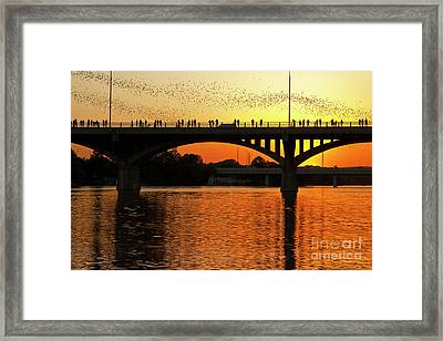 A Vivid Sunset Surrounds The Mexican Free-tailed Bats As They Fly Out Of Congress Avenue Bridge Framed Print