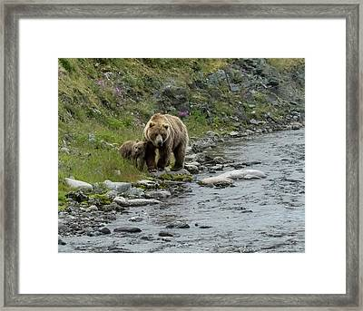 Framed Print featuring the photograph A Walk Along The Creek by Cheryl Strahl