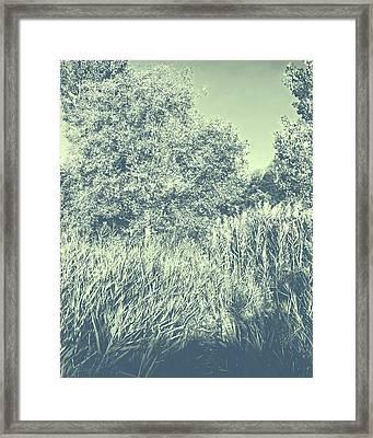A Walk Amongst The Reeds Cool Gray Framed Print