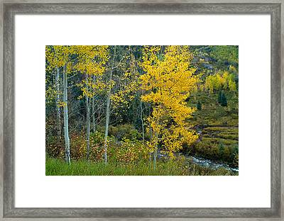 A Walk In The Aspen Forest Framed Print