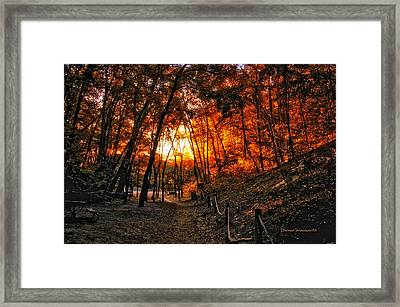 A Walk In The Autumn Woods Framed Print