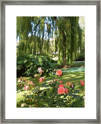 A Walk In The Park Framed Print by Ann Johndro-Collins