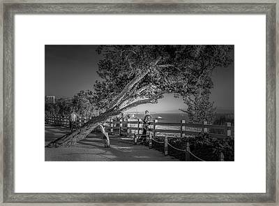 A Walk In The Park B And W Framed Print