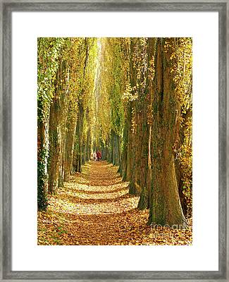 A Walk In The Poplars Framed Print by Alex Cassels