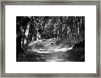 A Walk In The Woods Framed Print by Edward Myers